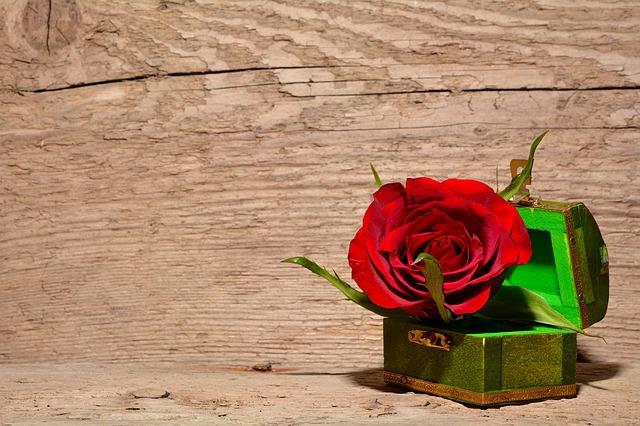 Rosa stabilizzata una rosa è per sempre